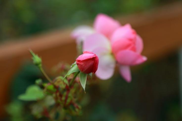 8be87-pinkflowers_edited
